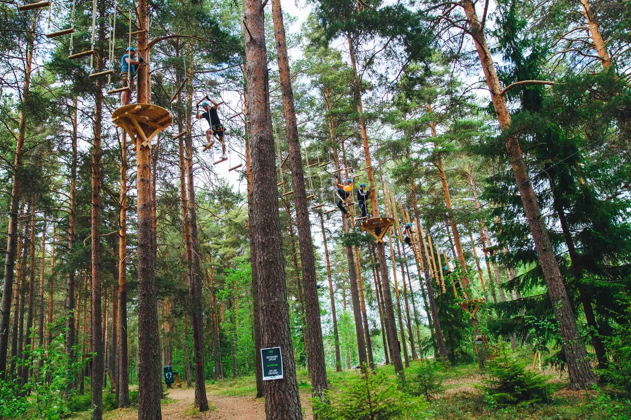 Klättra bland trädtopparna